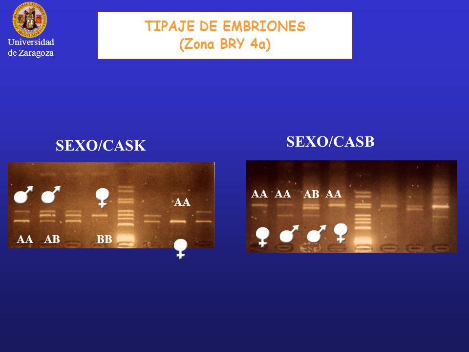SEXO/CASK ABAABB AA TIPAJE DE EMBRIONES (Zona BRY 4a) SEXO/CASB AB AA Universidad de Zaragoza