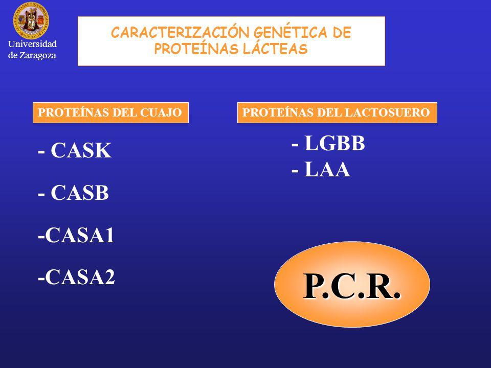 P.C.R.