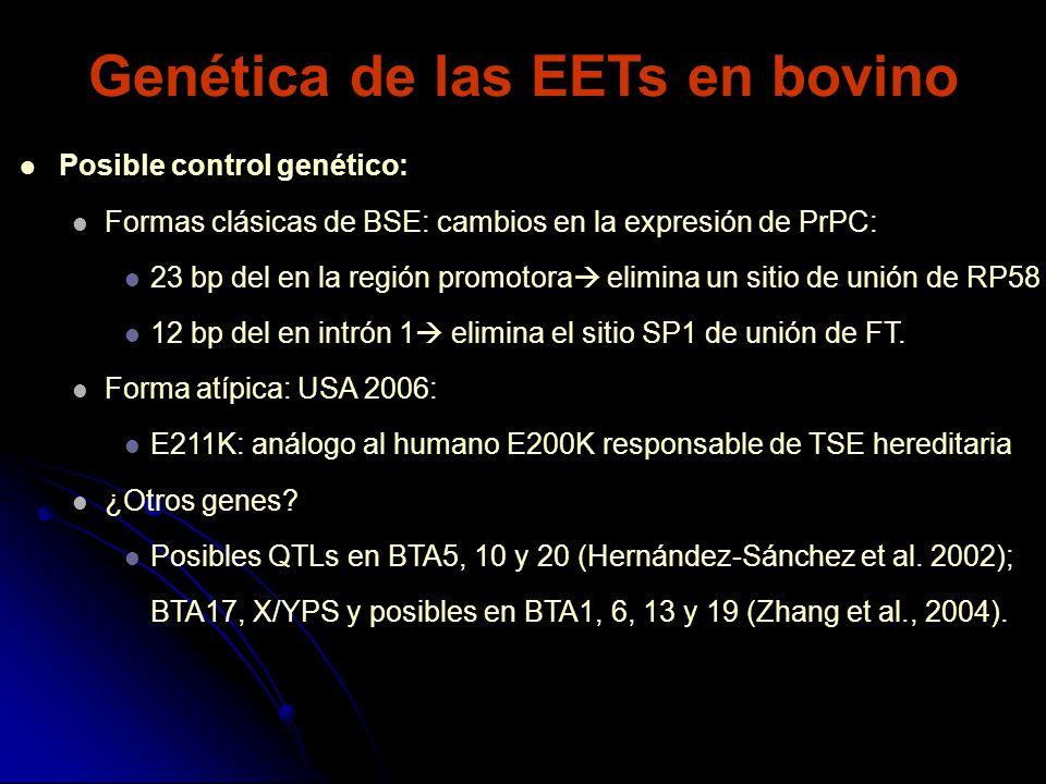 Genética de las EETs en bovino Posible control genético: Formas clásicas de BSE: cambios en la expresión de PrPC: 23 bp del en la región promotora eli