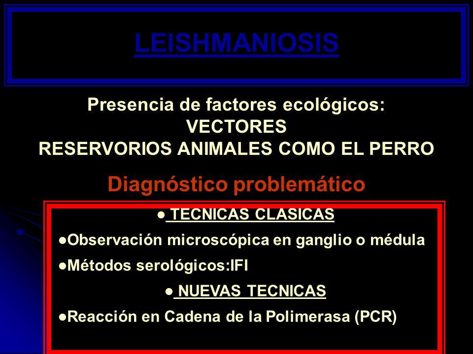 LEISHMANIOSIS Presencia de factores ecológicos: VECTORES RESERVORIOS ANIMALES COMO EL PERRO Presencia de factores ecológicos: VECTORES RESERVORIOS ANI