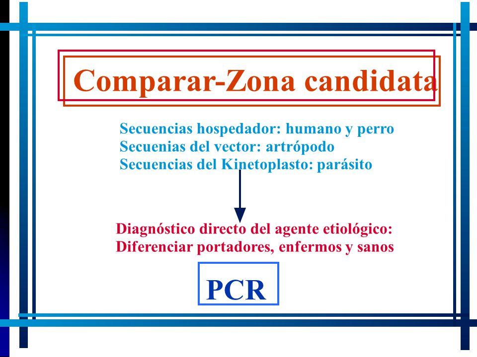 Comparar-Zona candidata Secuencias hospedador: humano y perro Secuenias del vector: artrópodo Secuencias del Kinetoplasto: parásito Diagnóstico direct