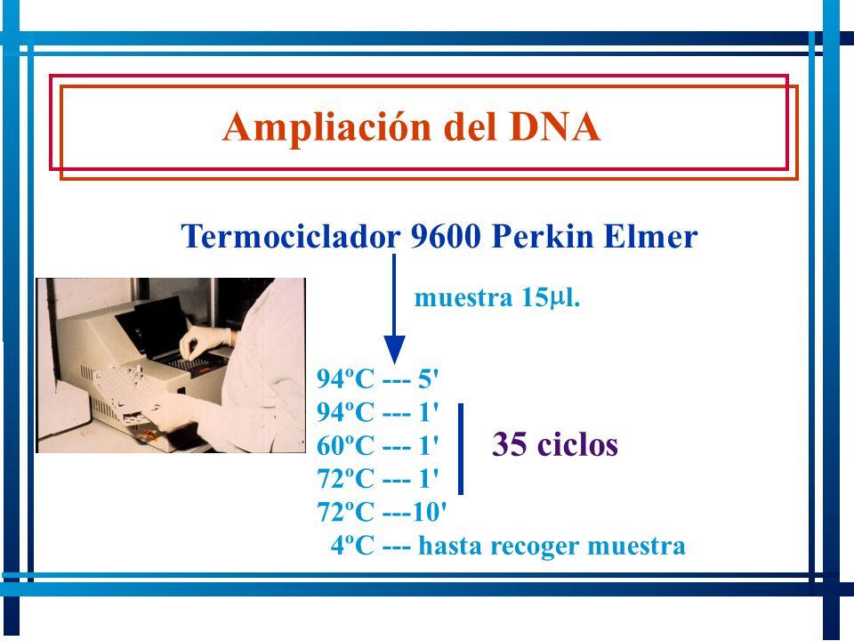 Ampliación del DNA 94ºC --- 5' 94ºC --- 1' 60ºC --- 1' 72ºC --- 1' 72ºC ---10' 4ºC --- hasta recoger muestra Termociclador 9600 Perkin Elmer 35 ciclos