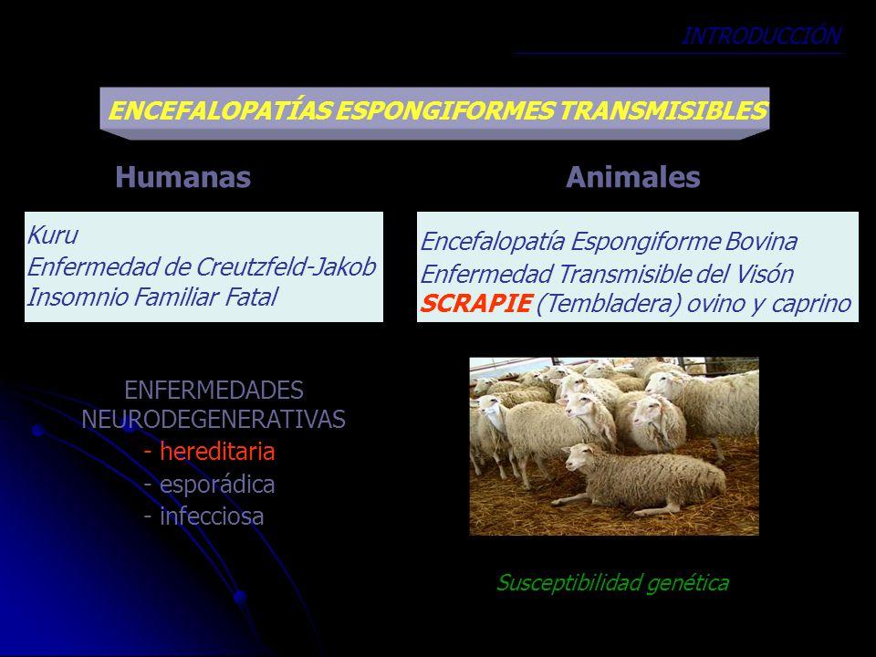 ENCEFALOPATÍAS ESPONGIFORMES TRANSMISIBLES ENFERMEDADES NEURODEGENERATIVAS - hereditaria - esporádica - infecciosa AnimalesHumanas Kuru Enfermedad de