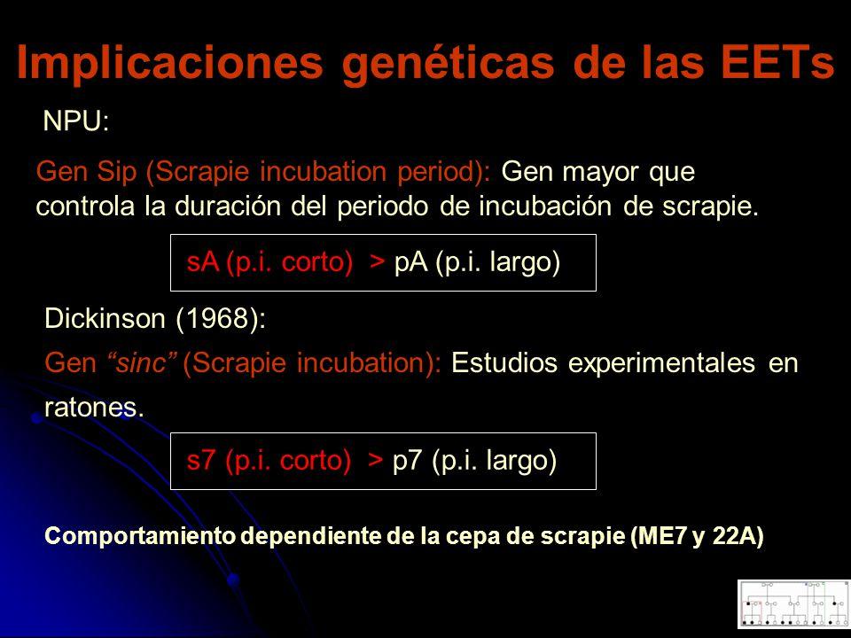 Implicaciones genéticas de las EETs Gen Sip (Scrapie incubation period): Gen mayor que controla la duración del periodo de incubación de scrapie. NPU: