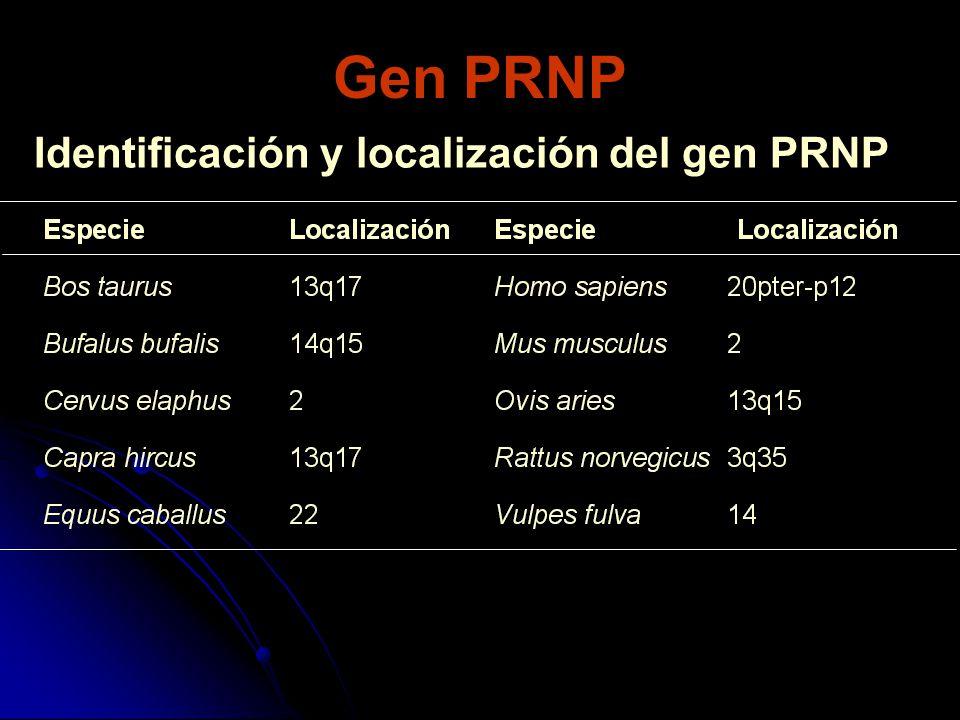Identificación y localización del gen PRNP