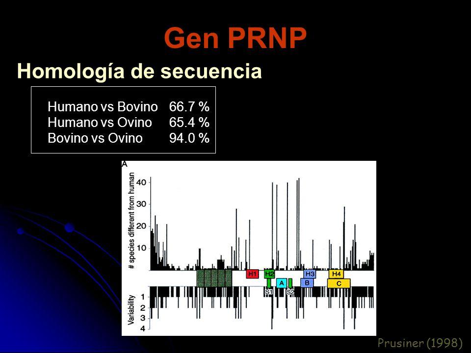 Gen PRNP Homología de secuencia Humano vs Bovino Humano vs Ovino Bovino vs Ovino 66.7 % 65.4 % 94.0 % Prusiner (1998)