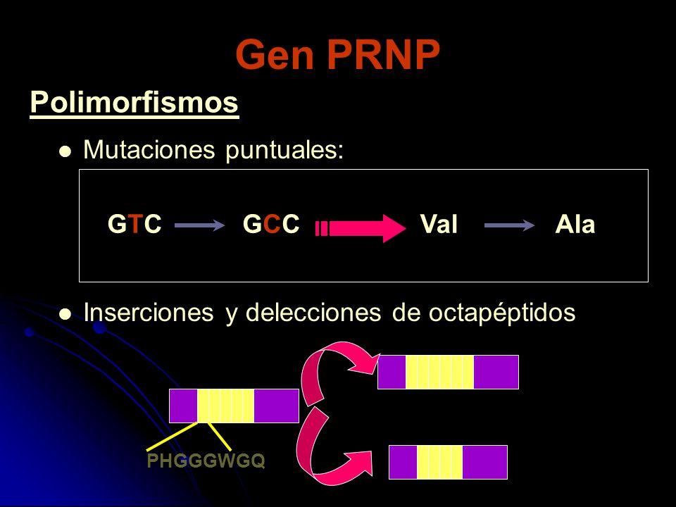 Gen PRNP Mutaciones puntuales: Inserciones y delecciones de octapéptidos GTCGCCGTCGCCValAla PHGGGWGQ Polimorfismos