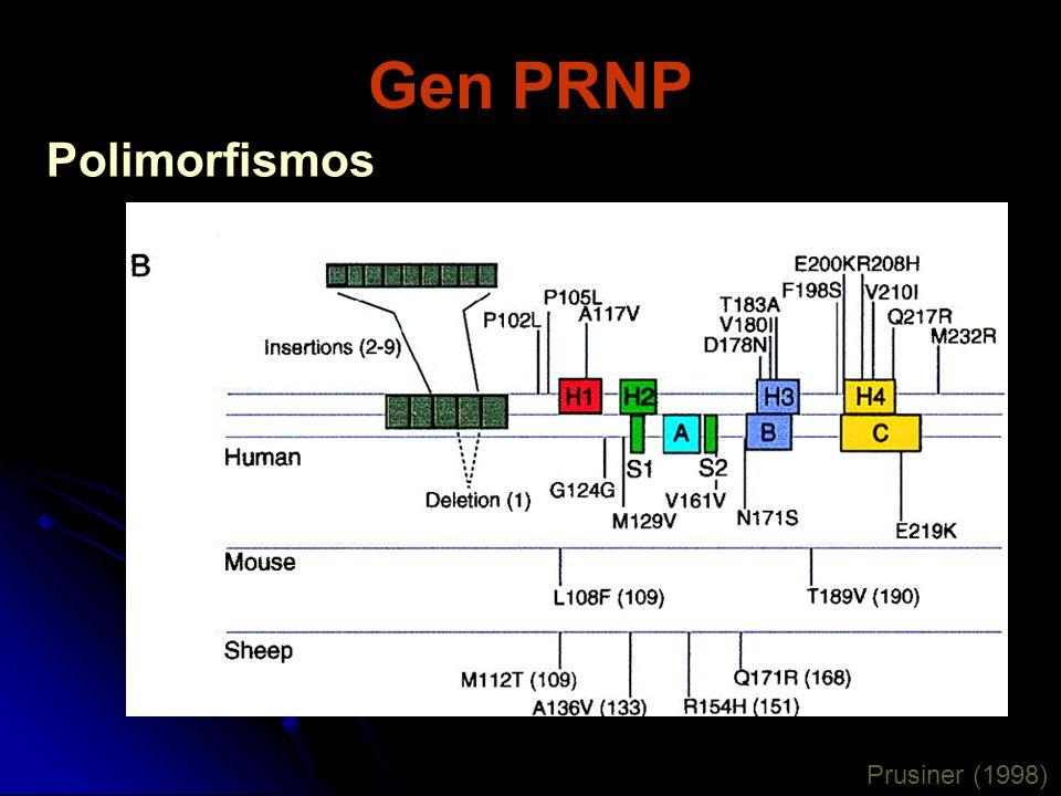Gen PRNP Prusiner (1998) Polimorfismos