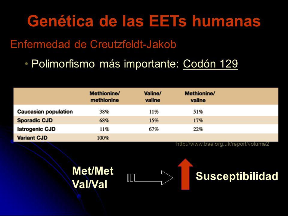 Genética de las EETs humanas Polimorfismo más importante: Codón 129 Enfermedad de Creutzfeldt-Jakob Met/Met Val/Val Susceptibilidad http://www.bse.org