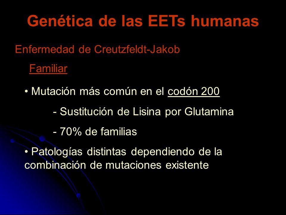 Genética de las EETs humanas Enfermedad de Creutzfeldt-Jakob Mutación más común en el codón 200 - Sustitución de Lisina por Glutamina - 70% de familia