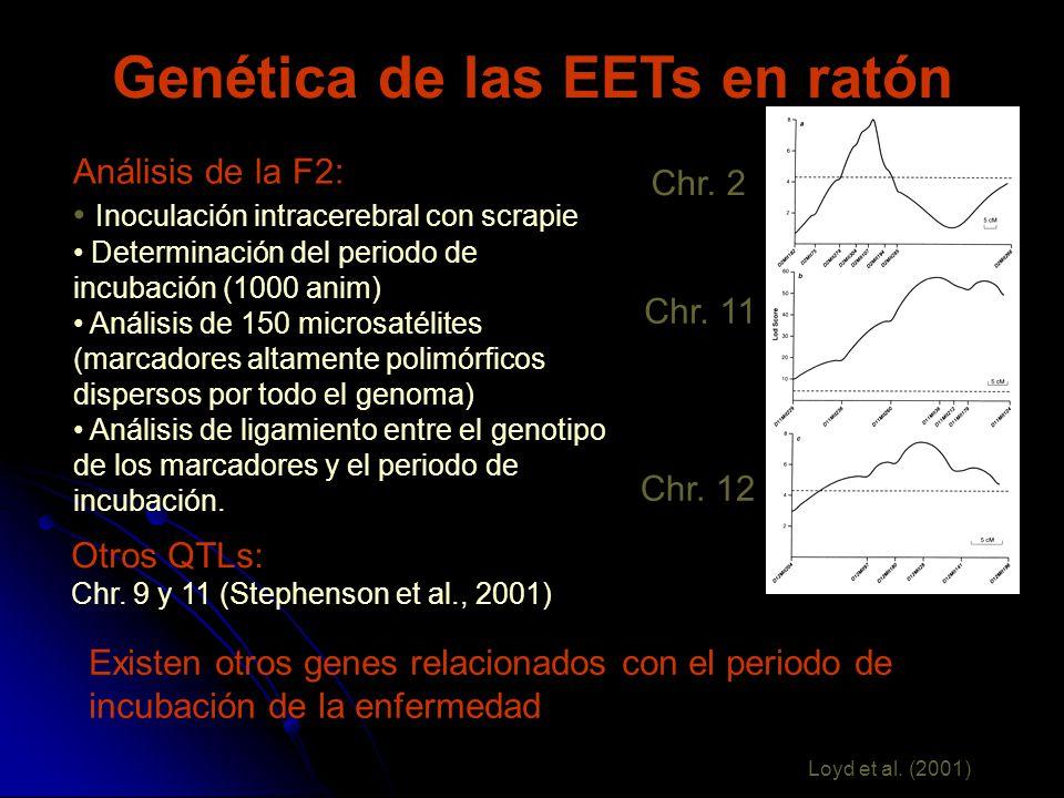 Genética de las EETs en ratón Análisis de la F2: Inoculación intracerebral con scrapie Determinación del periodo de incubación (1000 anim) Análisis de