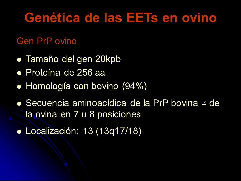 Genética de las EETs en ovino Gen PrP ovino Tamaño del gen 20kpb Proteína de 256 aa Homología con bovino (94%) Secuencia aminoacídica de la PrP bovina