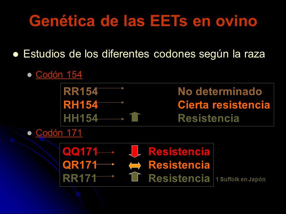 Estudios de los diferentes codones según la raza Codón 154 Codón 171 RR154No determinado RH154Cierta resistencia HH154Resistencia QQ171Resistencia QR1