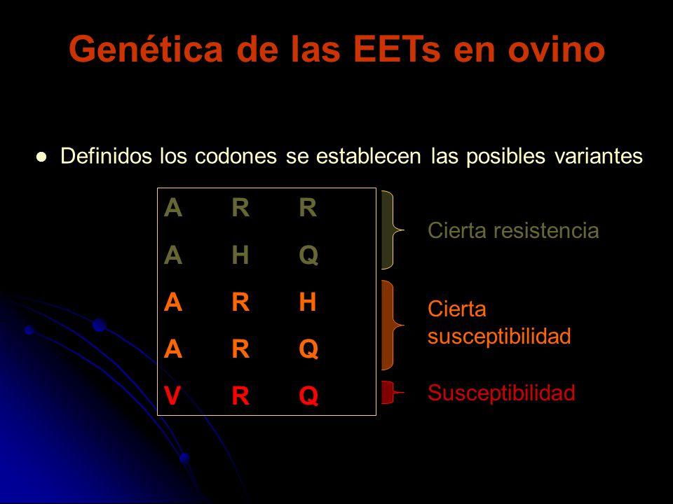Genética de las EETs en ovino Definidos los codones se establecen las posibles variantes ARRAHQARHARQVRQARRAHQARHARQVRQ Cierta resistencia Cierta susc