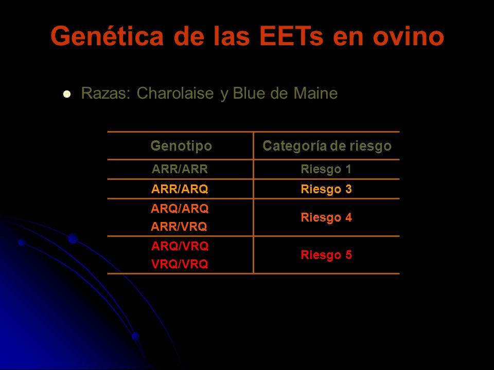 Riesgo 4 ARQ/ARQ ARR/VRQ Riesgo 5 ARQ/VRQ VRQ/VRQ Riesgo 3ARR/ARQ Riesgo 1ARR/ARR Categoría de riesgoGenotipo Razas: Charolaise y Blue de Maine