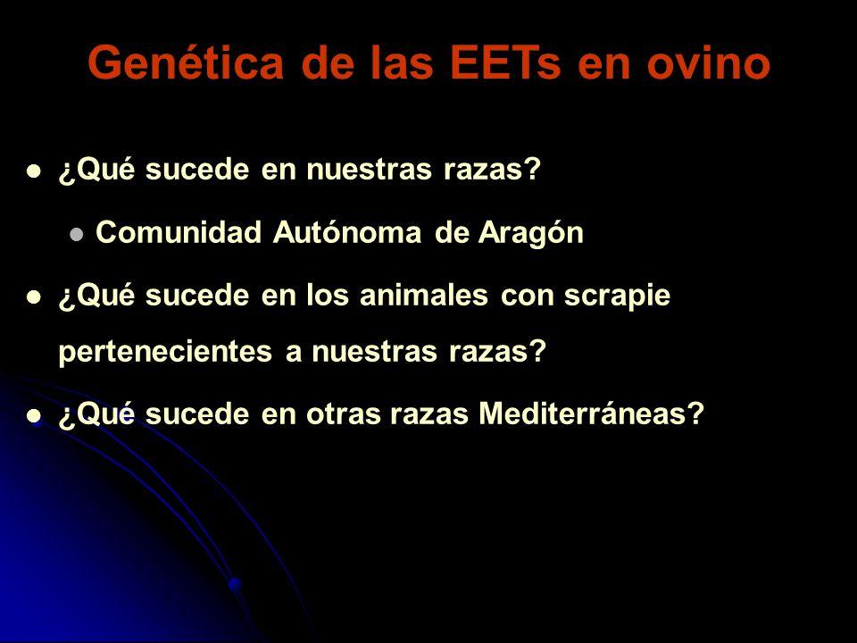 Genética de las EETs en ovino ¿Qué sucede en nuestras razas? Comunidad Autónoma de Aragón ¿Qué sucede en los animales con scrapie pertenecientes a nue