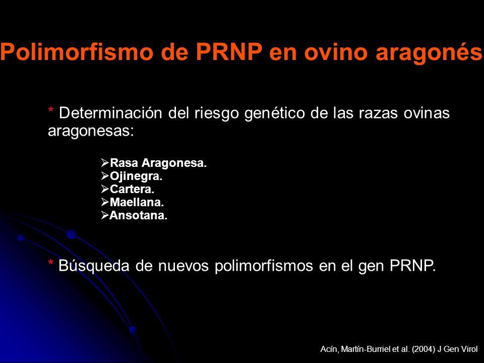 * Determinación del riesgo genético de las razas ovinas aragonesas: Rasa Aragonesa. Ojinegra. Cartera. Maellana. Ansotana. * Búsqueda de nuevos polimo