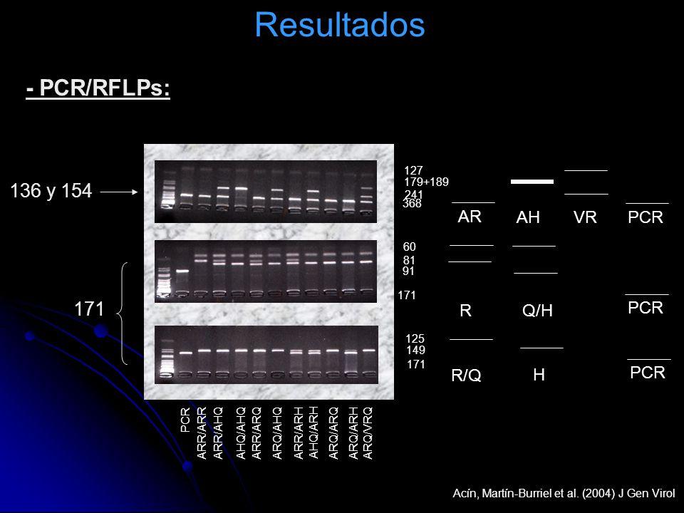 Resultados 136 y 154 171 - PCR/RFLPs: 368 241 179+189 AR AHVR 127 R Q/H 91 81 60 PCR 171 R/Q H PCR 171 149 125 PCR ARR/ARR ARR/AHQAHQ/AHQARR/ARQARQ/AH