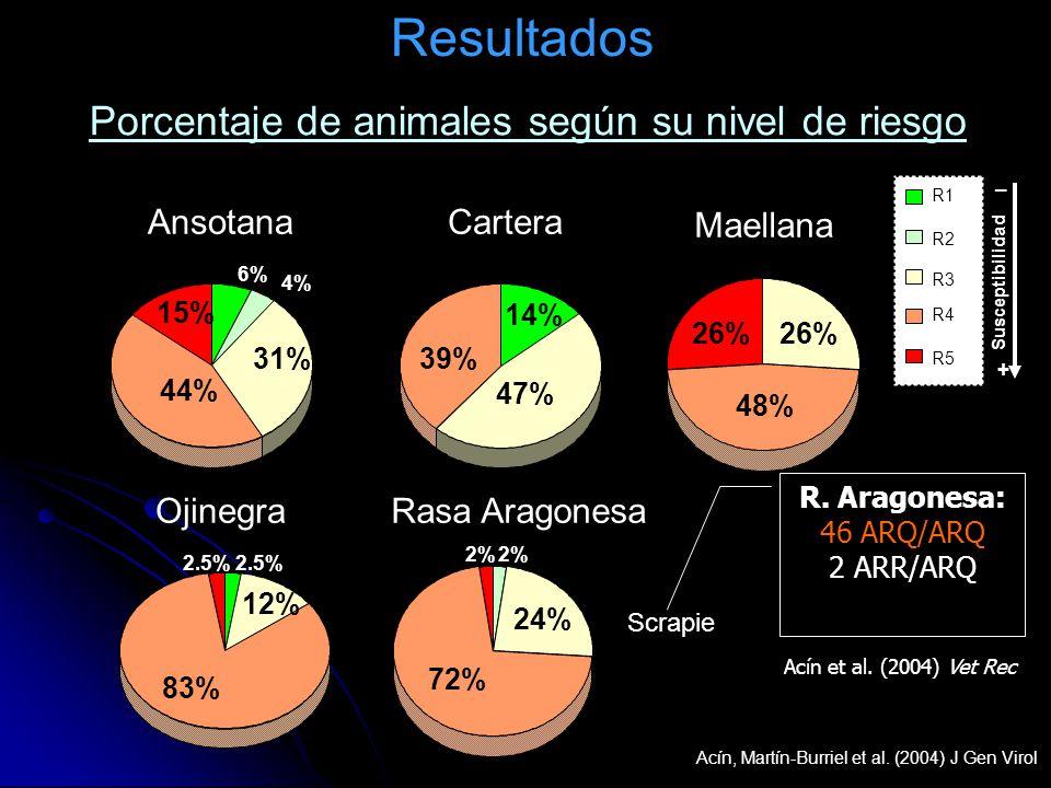 Resultados R1 R2 R3 R4 R5 AnsotanaCartera Maellana OjinegraRasa Aragonesa 44% 31% 15% 39% 47% 14% 6% 4% 26% 48% 26% 83% 12% 2.5% 72% 24% 2% Porcentaje