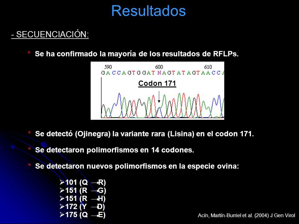 Resultados * Se detectó (Ojinegra) la variante rara (Lisina) en el codon 171. * Se detectaron polimorfismos en 14 codones. * Se detectaron nuevos poli