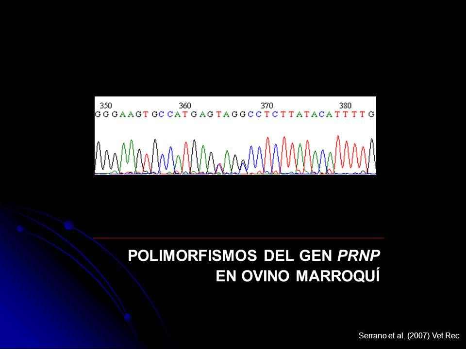 POLIMORFISMOS DEL GEN PRNP EN OVINO MARROQUÍ Serrano et al. (2007) Vet Rec