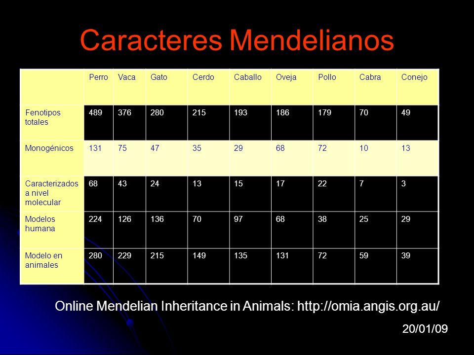 Caracteres Mendelianos Online Mendelian Inheritance in Animals: http://omia.angis.org.au/ PerroVacaGatoCerdoCaballoOvejaPolloCabraConejo Fenotipos tot