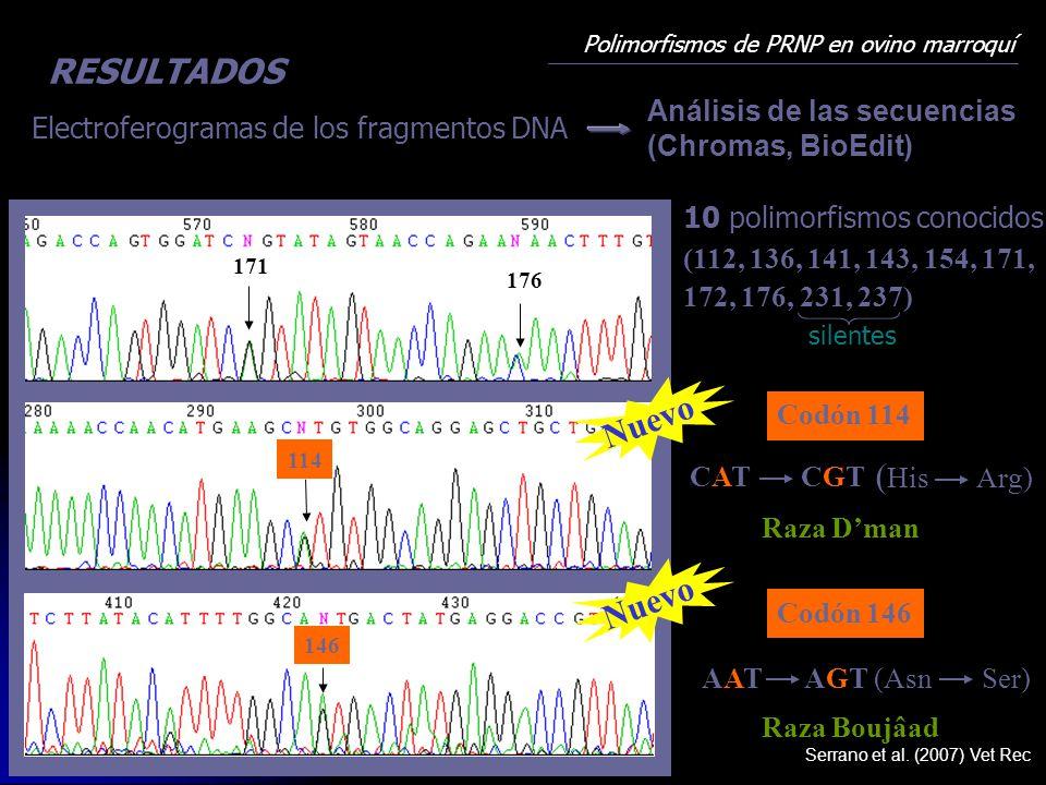 Polimorfismos de PRNP en ovino marroquí Electroferogramas de los fragmentos DNA Análisis de las secuencias (Chromas, BioEdit) CGTCGTCATCAT ( His Arg)