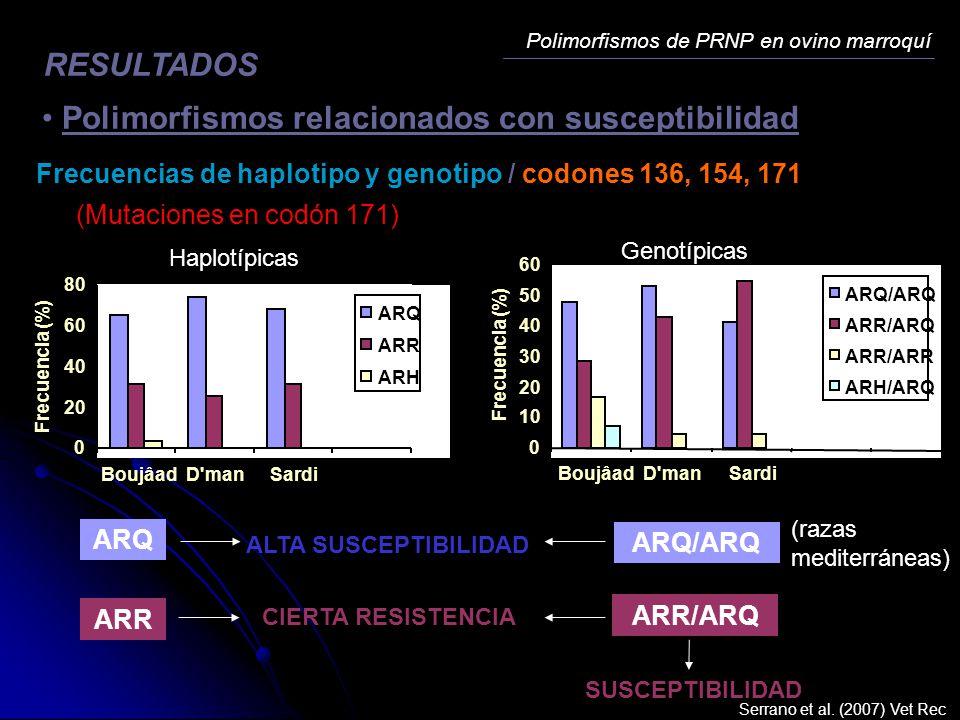 Polimorfismos de PRNP en ovino marroquí RESULTADOS Polimorfismos relacionados con susceptibilidad Frecuencias de haplotipo y genotipo / codones 136, 1