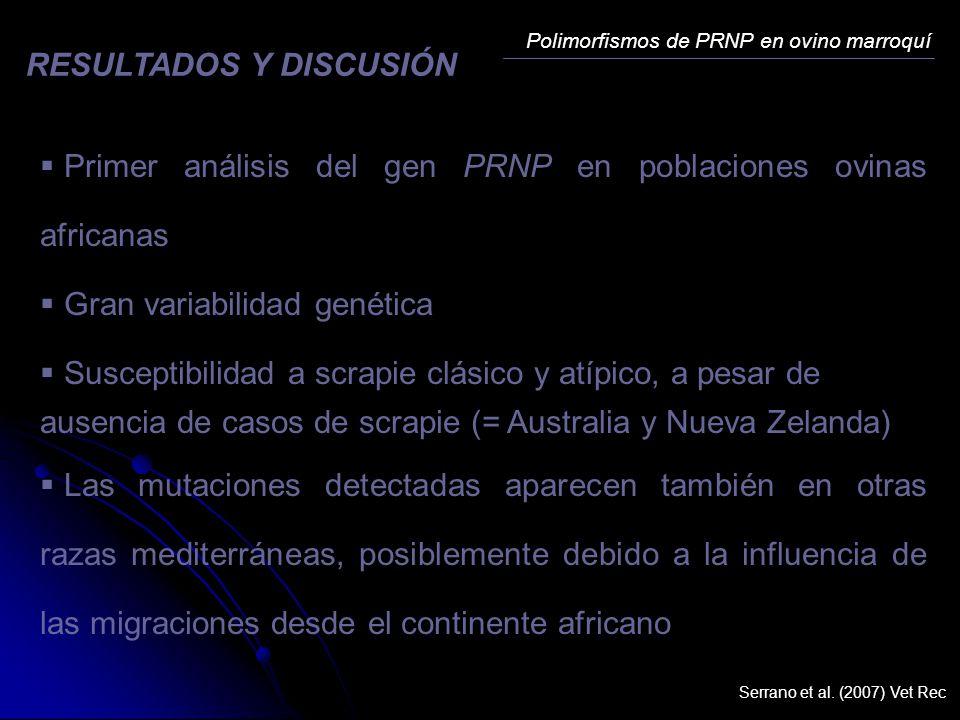 Primer análisis del gen PRNP en poblaciones ovinas africanas Gran variabilidad genética Susceptibilidad a scrapie clásico y atípico, a pesar de ausenc