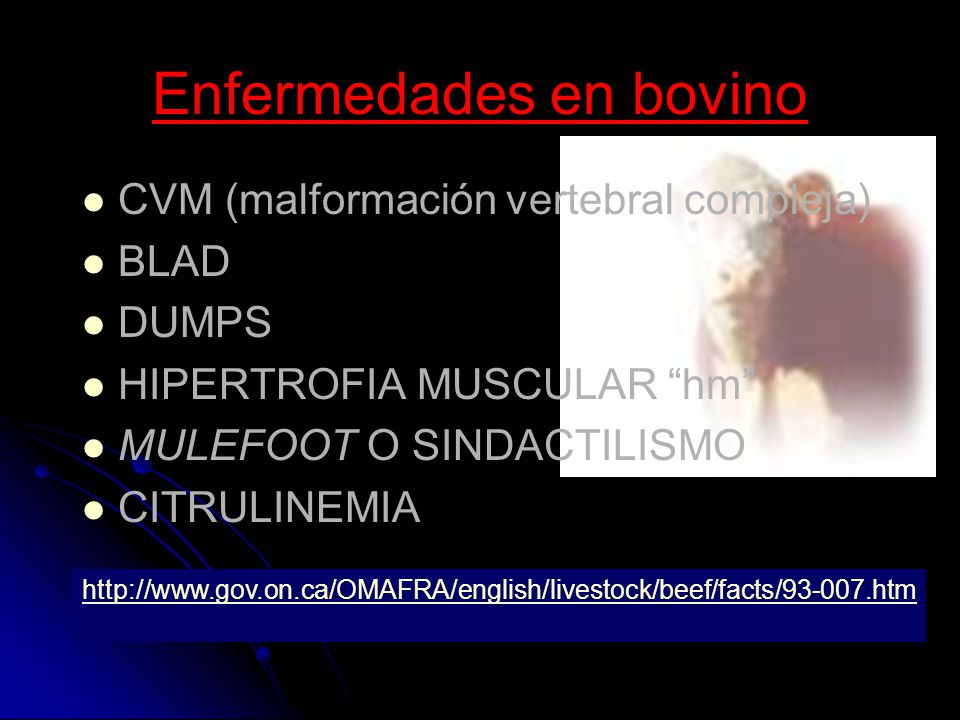 Enfermedades en bovino CVM (malformación vertebral compleja) BLAD DUMPS HIPERTROFIA MUSCULAR hm MULEFOOT O SINDACTILISMO CITRULINEMIA http://www.gov.o
