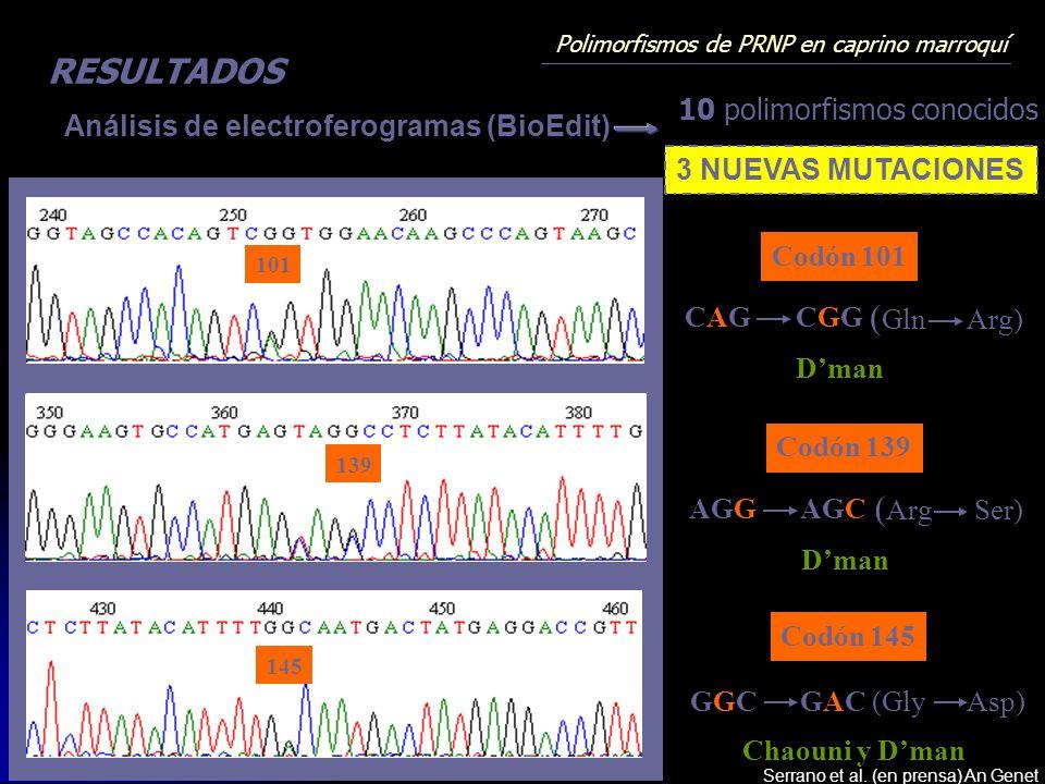 Polimorfismos de PRNP en caprino marroquí RESULTADOS 145 138 139 101 Análisis de electroferogramas (BioEdit) 3 NUEVAS MUTACIONES AGCAGG ( Arg Ser) Dma