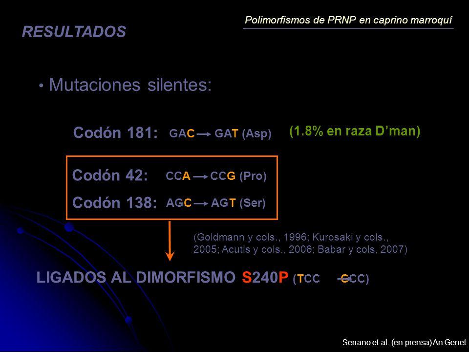 Polimorfismos de PRNP en caprino marroquí RESULTADOS Mutaciones silentes: Codón 181: GAC GAT (Asp) (1.8% en raza Dman) Codón 42: Codón 138: CCA CCG (P