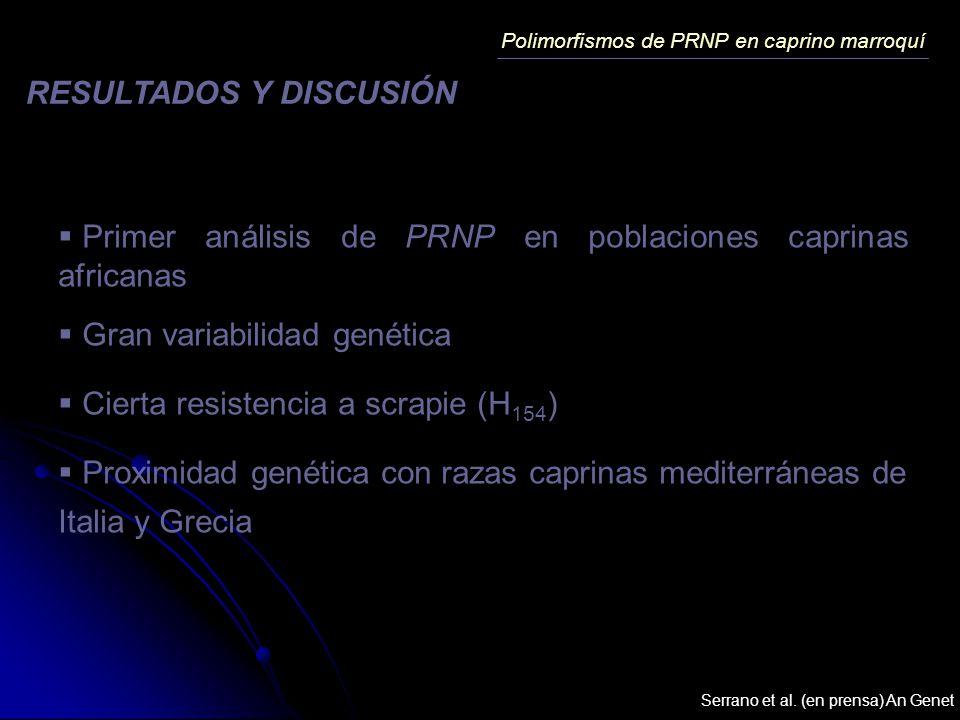 Primer análisis de PRNP en poblaciones caprinas africanas Gran variabilidad genética Cierta resistencia a scrapie (H 154 ) Proximidad genética con raz