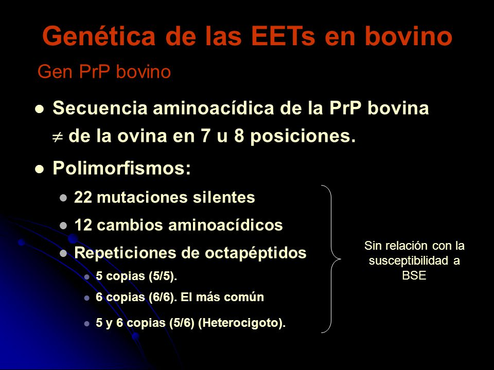 Genética de las EETs en bovino Secuencia aminoacídica de la PrP bovina de la ovina en 7 u 8 posiciones. Polimorfismos: 22 mutaciones silentes 12 cambi