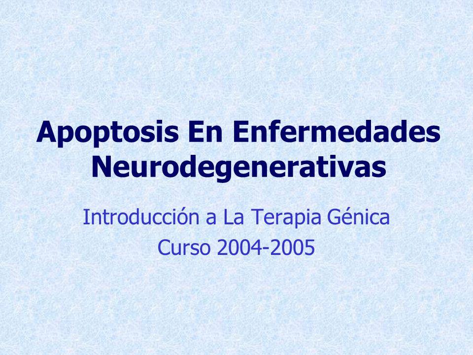 Factor De Trascripción NF-kB Actividad protectora in vitro e in vivo: NF- B APOPTOSIS Falta de factores neurotróficos Excitotoxicidad Estrés oxidativo Mn SOD Bcl-2 IAP Promueve apoptosis: NF- B O - Excitotoxinas Glutamato Acido kainico N-metil-D-aspartato APOPTOSIS NEURONAL
