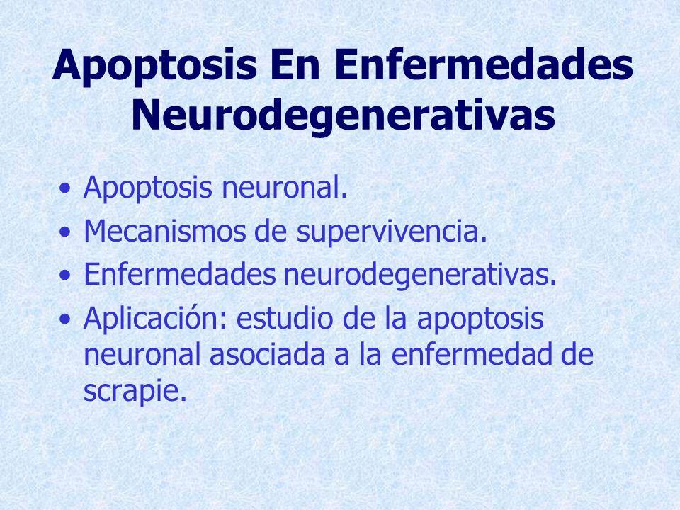 Receptores De Membrana http://perso.wanadoo.fr/adna/Apoptose.html Fas p75 Apoptosis por falta de factores neurotróficos