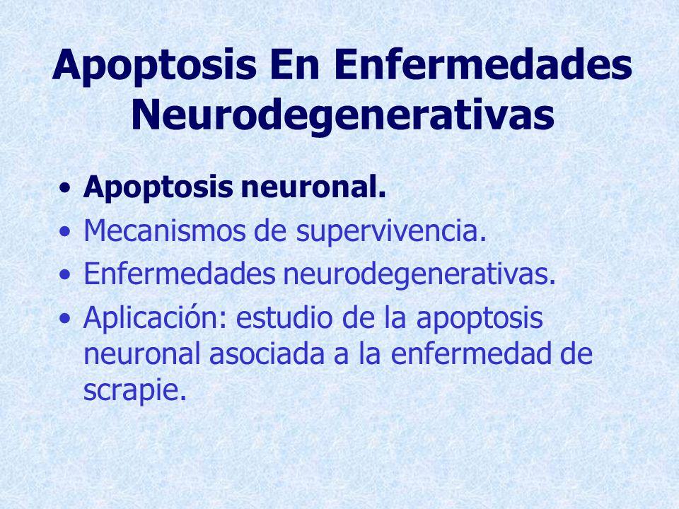 Apoptosis En Enfermedades Neurodegenerativas Apoptosis neuronal.