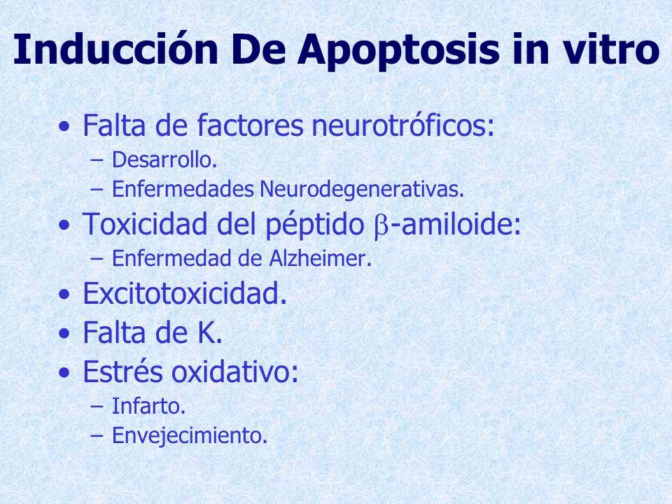 Radicales Libres La apoptosis neuronal producida por diversos estímulos (privación de factores neurotróficos, excitotoxididad, falta de K, exposición a b-amiloide, isquemia) se acompaña de la producción de radicales libres de O.
