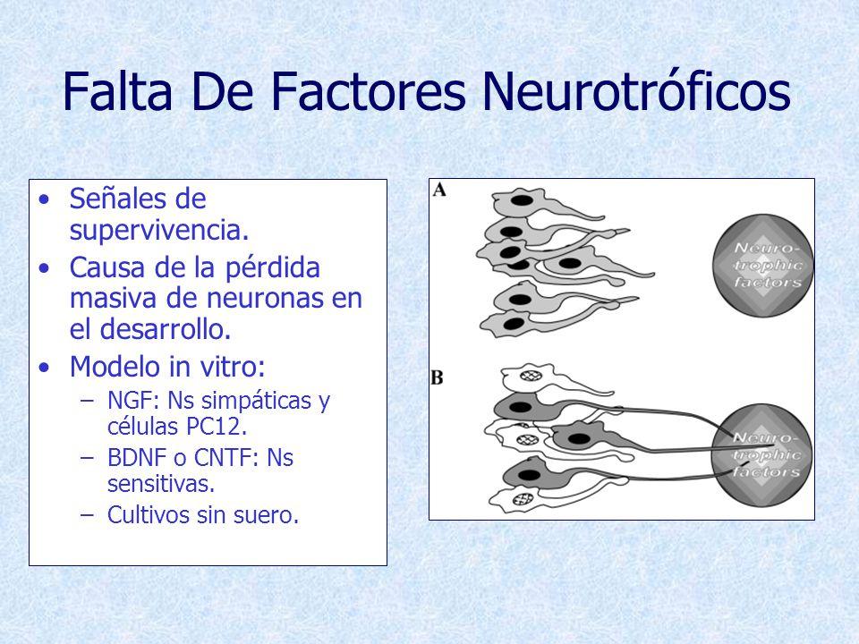 Enfermedades Neurodegenerativas Corteza cerebral: –Enfermedad de Alzheimer (demencia senil).