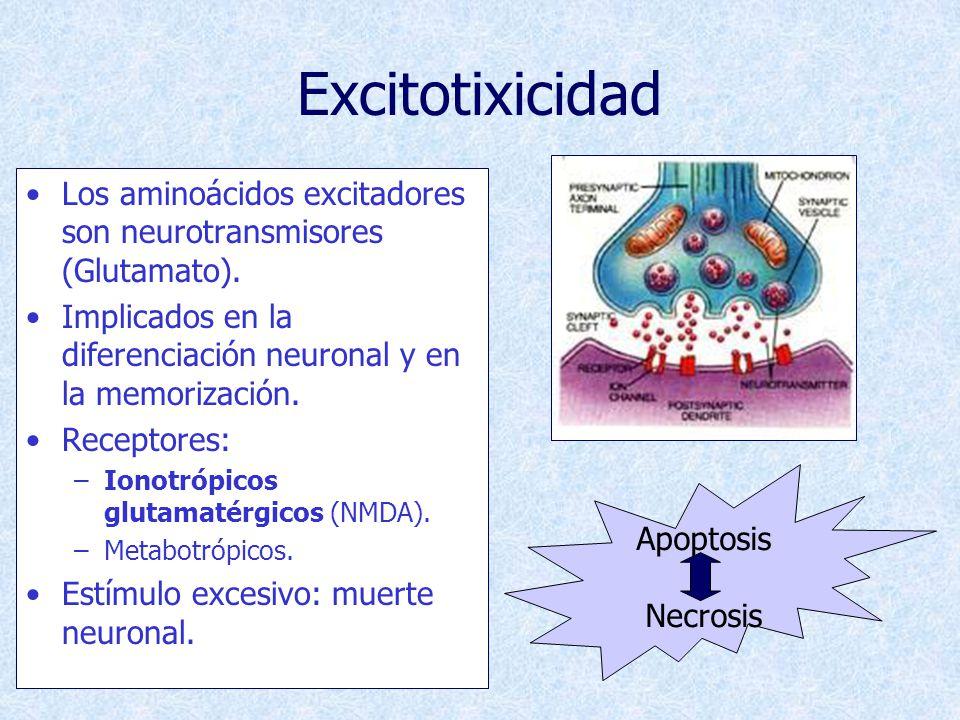 Inducción De Apoptosis Falta de factores neurotróficos: –Desarrollo.