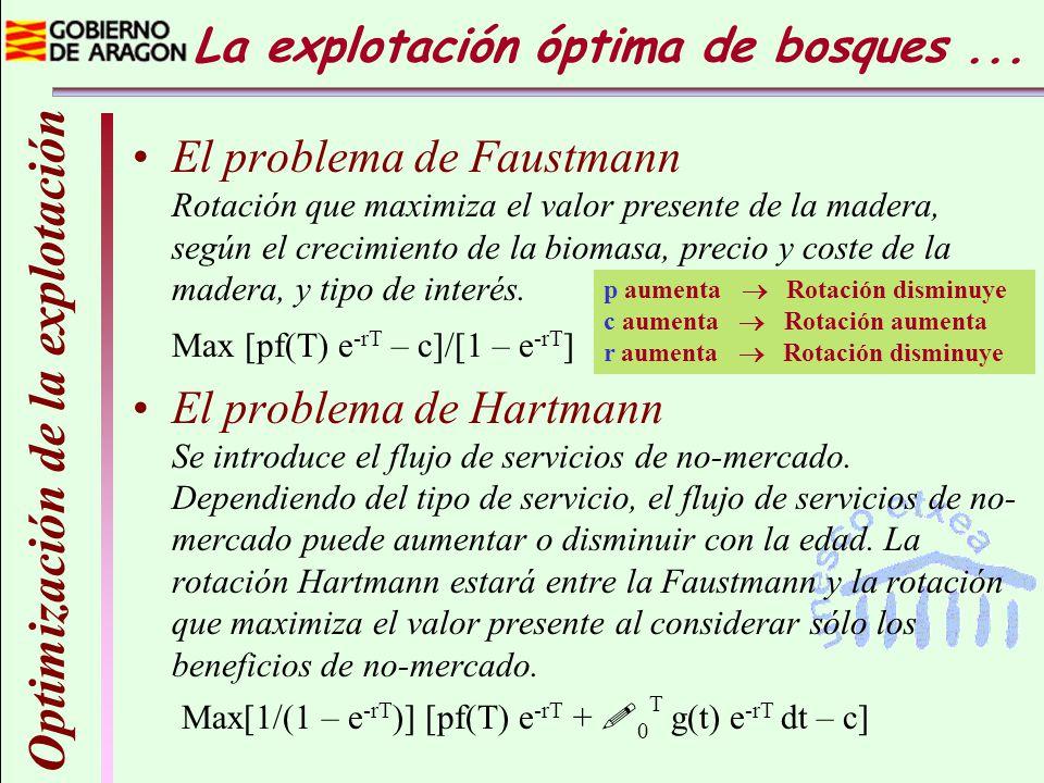 La explotación óptima de bosques... Optimización de la explotación El problema de Faustmann Rotación que maximiza el valor presente de la madera, segú