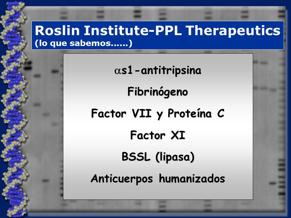 Roslin Institute-PPL Therapeutics (lo que sabemos......) s1-antitripsina s1-antitripsinaFibrinógeno Factor VII y Proteína C Factor XI BSSL (lipasa) Anticuerpos humanizados