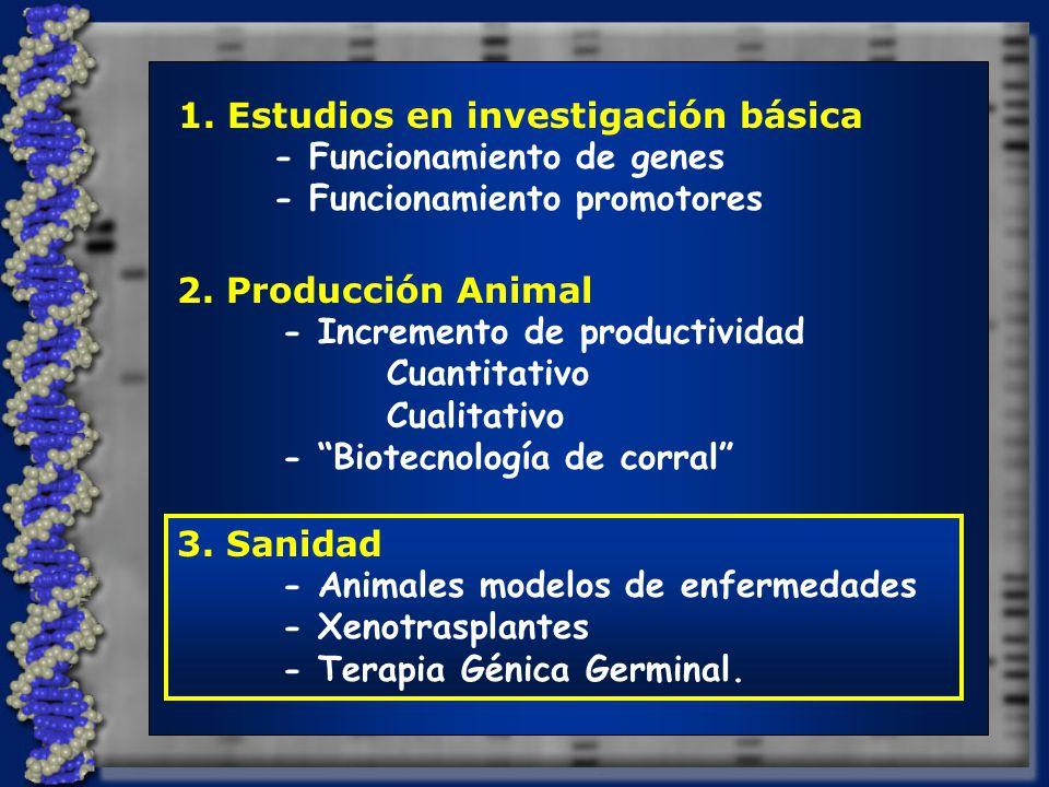 1.Estudios en investigación básica - Funcionamiento de genes - Funcionamiento promotores 2.