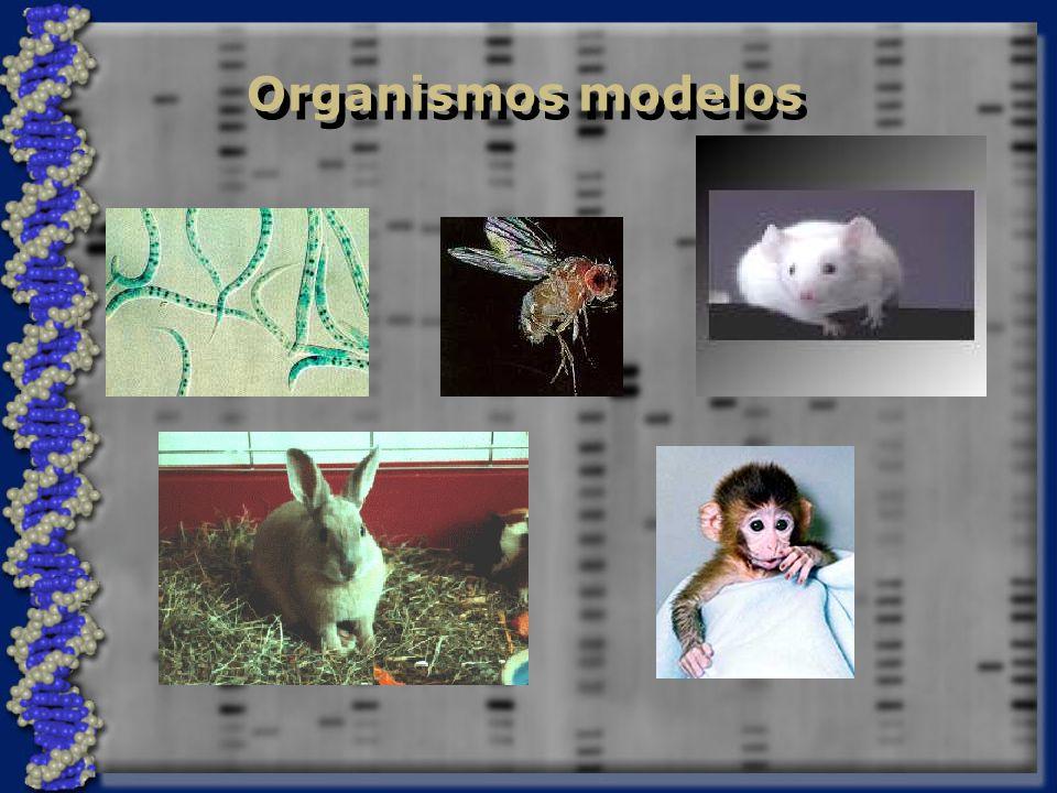 Organismos modelos