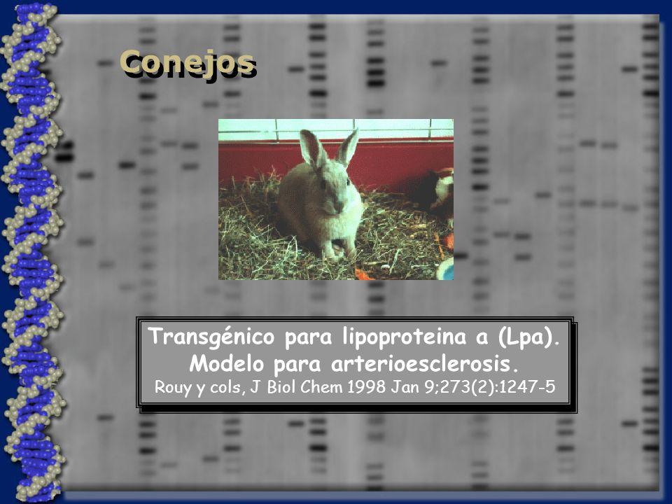 Conejos Transgénico para lipoproteina a (Lpa).Modelo para arterioesclerosis.