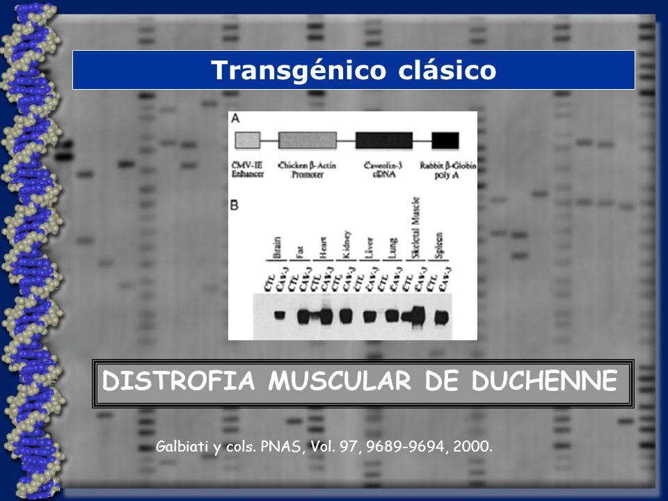 Transgénico clásico DISTROFIA MUSCULAR DE DUCHENNE Galbiati y cols. PNAS, Vol. 97, 9689-9694, 2000.
