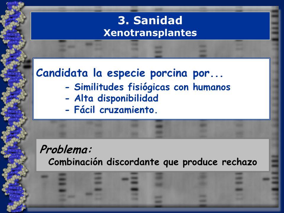 3.Sanidad Xenotransplantes Candidata la especie porcina por...