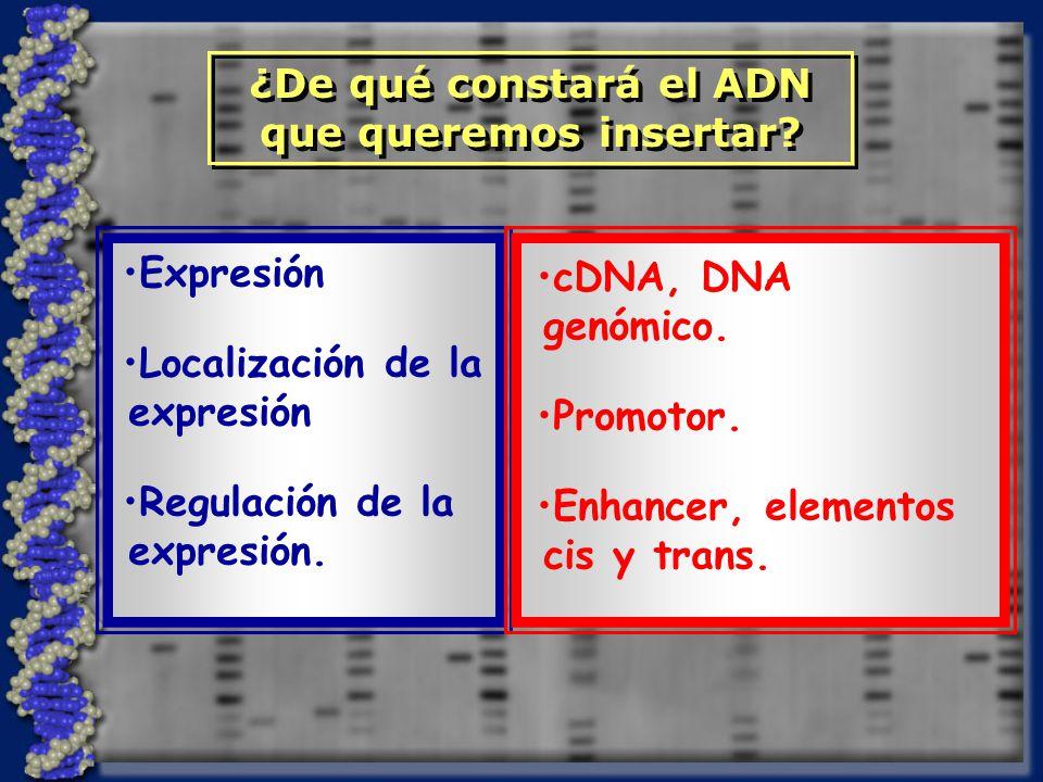 Expresión Localización de la expresión Regulación de la expresión.