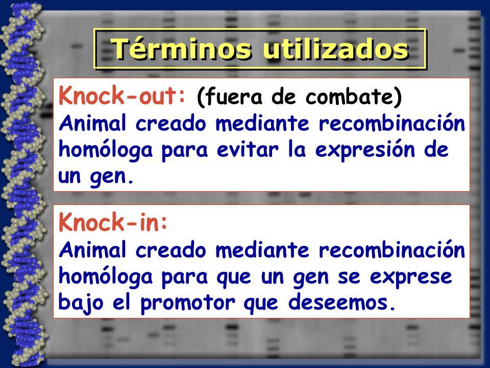 Knock-in: Animal creado mediante recombinación homóloga para que un gen se exprese bajo el promotor que deseemos.