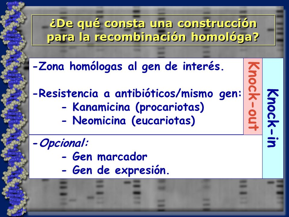 -Zona homólogas al gen de interés.